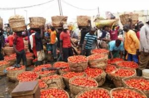 Ban Importation Of Tomatoes -Farmers Beg Nigerian Government