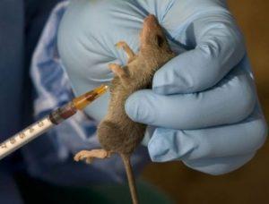 Update! Five Dead After Lassa Fever Outbreak In Benue